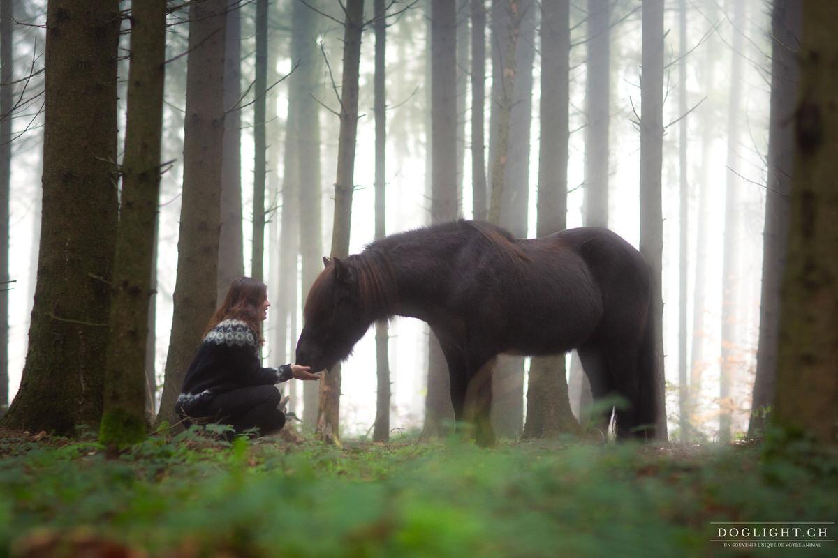 Cheval islandais dans la forêt