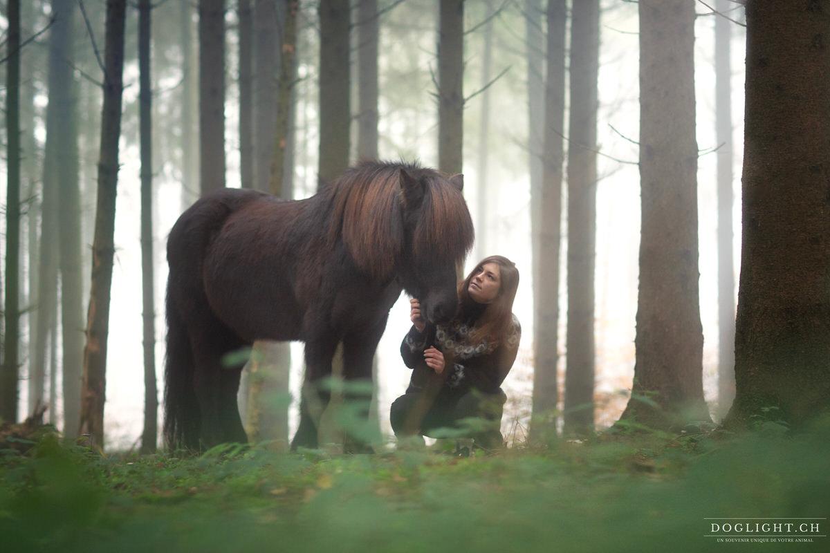 Cheval islandais et cavalière