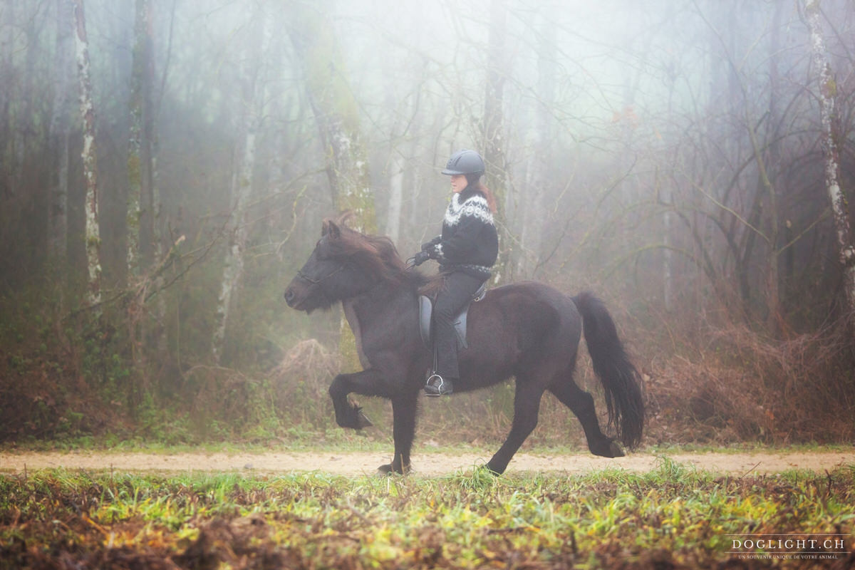 Tölt cheval islandais
